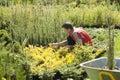 Man gardener works in the garden Royalty Free Stock Photo