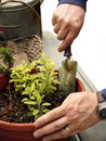 Man gardening Stock Photo