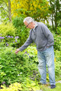 Man gardening in his garden old and tending to colorful Royalty Free Stock Photography