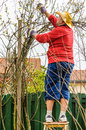 Man gardening spring time working in backyard rose bush in garden on small ladder Stock Images