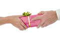 Man giving a present to a woman isolated on white Stock Image
