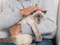 Man and gorgeous pet cat Royalty Free Stock Photo