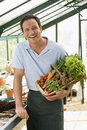 Man in greenhouse holding basket of vegetables Royalty Free Stock Images