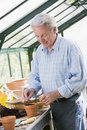 Man in greenhouse putting seed in pot smiling Royalty Free Stock Photo