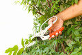 Man hand cutting tree branch in garden on day time Stock Image