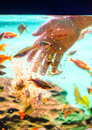 Man hand feeding fish with flakes Royalty Free Stock Photo