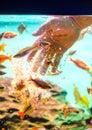 Man hand feeding fish with flakes Royalty Free Stock Photo