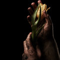 Man hand with flower on black background Royalty Free Stock Images