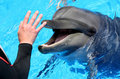 Man hand petting a dolphin Royalty Free Stock Photography