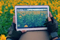 Man hand take photo by tablet at sunflower field Royalty Free Stock Photo