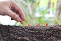 Man hands planting seeds into the ground. Royalty Free Stock Photo