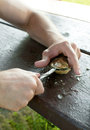 Man hands shucking oysters on picnic table outside Stock Photo