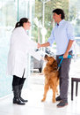 Man handshaking vet doctor taking his dog Stock Images