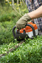 Man with hedge trimmer Royalty Free Stock Images