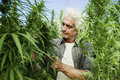Man in a hemp field Royalty Free Stock Photo
