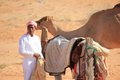 A man and his camel image taken in the wahiba sands desert in oman Royalty Free Stock Image