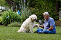 Man and his dog resting by garden senior male on lawn near the flower Stock Photos