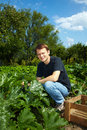 Man in his vegetable garden Stock Photo