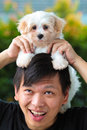 Man holding cute maltese puppy on his head Royalty Free Stock Photography