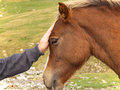 Man and horse friendship Royalty Free Stock Photography