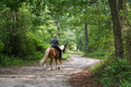 Man Horseback Riding Royalty Free Stock Photography