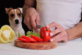 Man in kitchen preparing dinner, meal, salad, with dog watching. Funny image. Vegetarian People and pets concept. Royalty Free Stock Photo