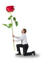 Man kneeling a rose holding Royalty Free Stock Photos