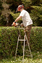 Man on ladder cutting hedge Stock Photo