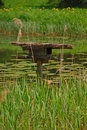Man made bird nest in the middle of pond surrounded by tall grass natural settings during summer baltic region europe Royalty Free Stock Photography