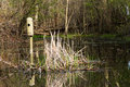 Man made wetland waterfowl nesting structures Stock Photos