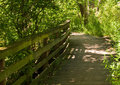 A man made wooden path in the woods in the summer Royalty Free Stock Photo