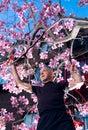 Man mature pruning tree Στοκ Εικόνες