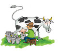 Man milking a cow Stock Images
