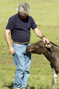 Man and Miniature Donkey Royalty Free Stock Images