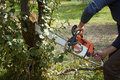 Man without the necessary protection cuts tree with chainsaw Royalty Free Stock Images
