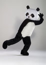 Man in panda costume over white background Royalty Free Stock Images