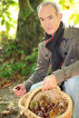 Man picking chestnuts senior in the woods Stock Images