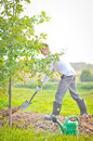 Man planting a tree. Royalty Free Stock Photo