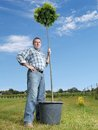 Man with potted tree young posing oak ready for planting in the ground Stock Image