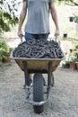 Man pushing a wheelbarrow full of carobs
