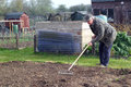 Man raking a seed bed an elderly he is creating fine tilth ready to sow vegetable seeds into in the spring Royalty Free Stock Photography