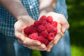 Man with raspberries a in blue holding fresh in hands Stock Photography