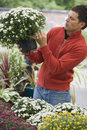 Man in red top shopping for flowers in garden centre looking at pot plant side view Royalty Free Stock Photo