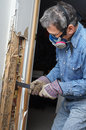 Man removing termite damaged wood from wall prying sheetrock and by infestation in house Stock Images