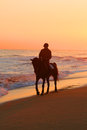 Man riding a horse on beach Royalty Free Stock Images