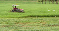 Man a riding on tractor mower Royalty Free Stock Photo