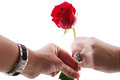 Man s hand giving a red rose to a womans hand isolated Royalty Free Stock Images