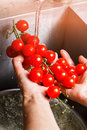 Man's hands washing red tomatoes. Royalty Free Stock Photo