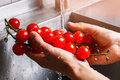Man's hands washing tomatoes. Royalty Free Stock Photo