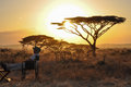 Man sitting at sunset in the park serengeti in africa Stock Photos